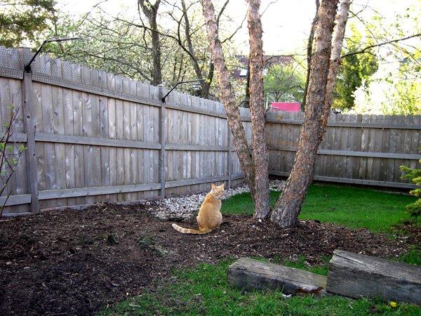 Забор с соседями