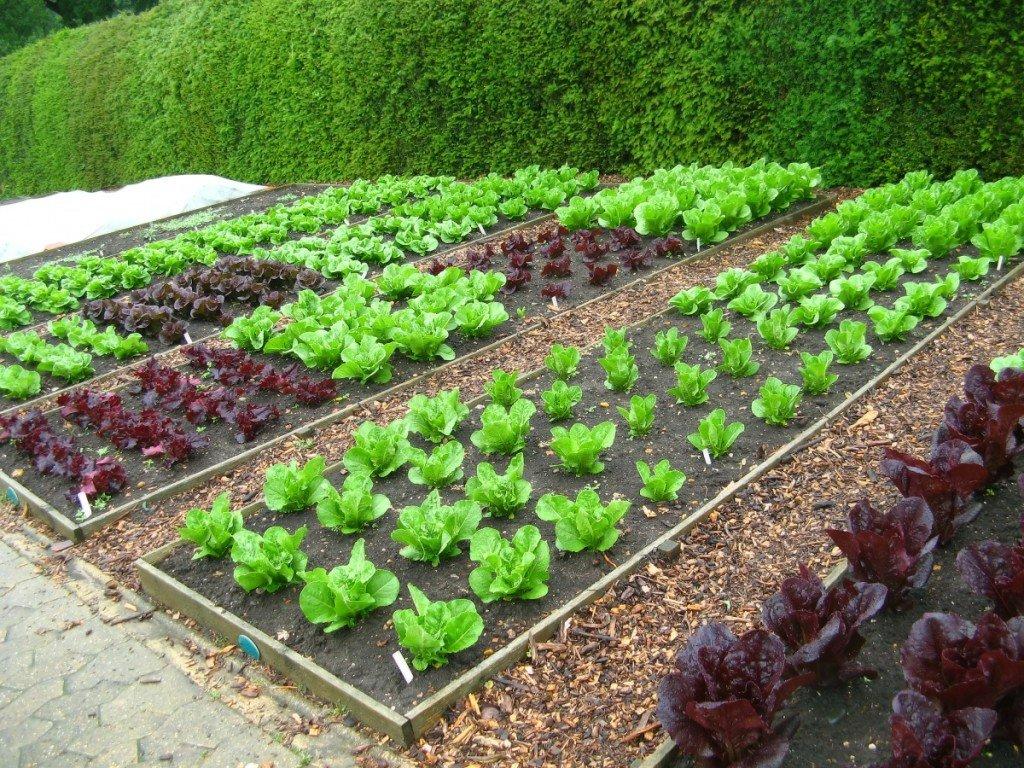Как перевести земли из сельхозназначения в ИЖС?